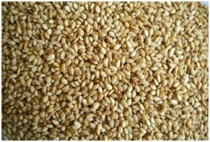 toasted-natural-sesame-seeds.jpg