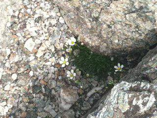 beautiful flowers growing out of a rock