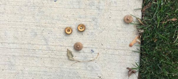 acorn funny face
